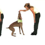 Dog Training Tips - How to Train a Puppy