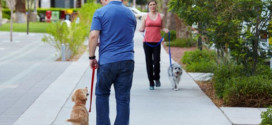 How to Train Your Dog to Walk On a Leash